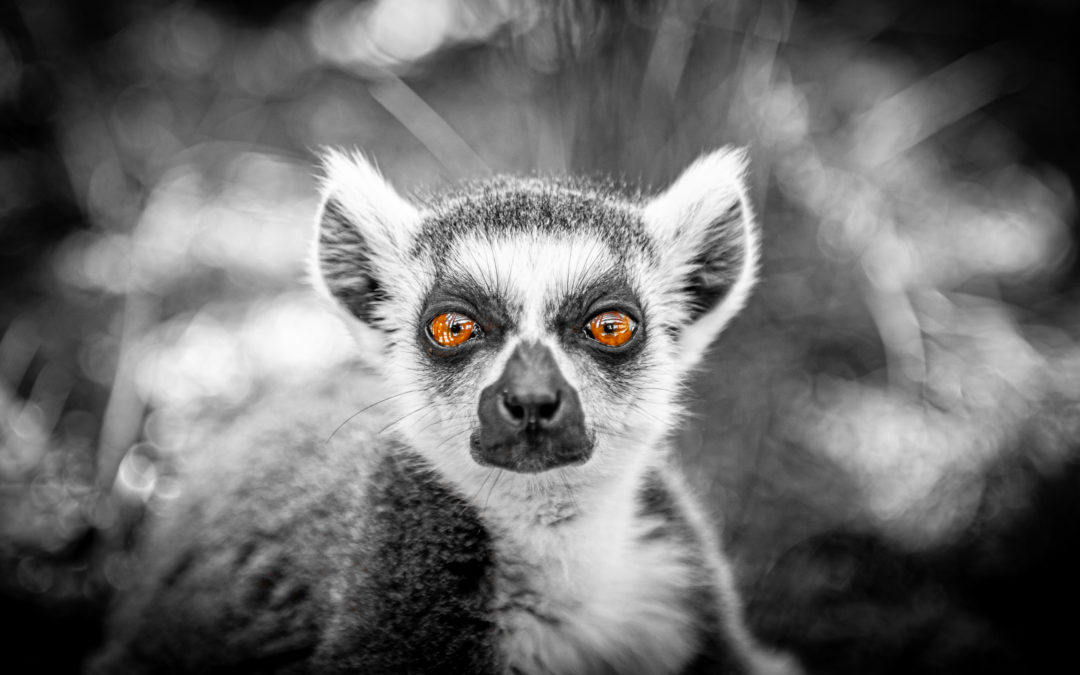 Zoo de Bordeaux-Pessac 2020